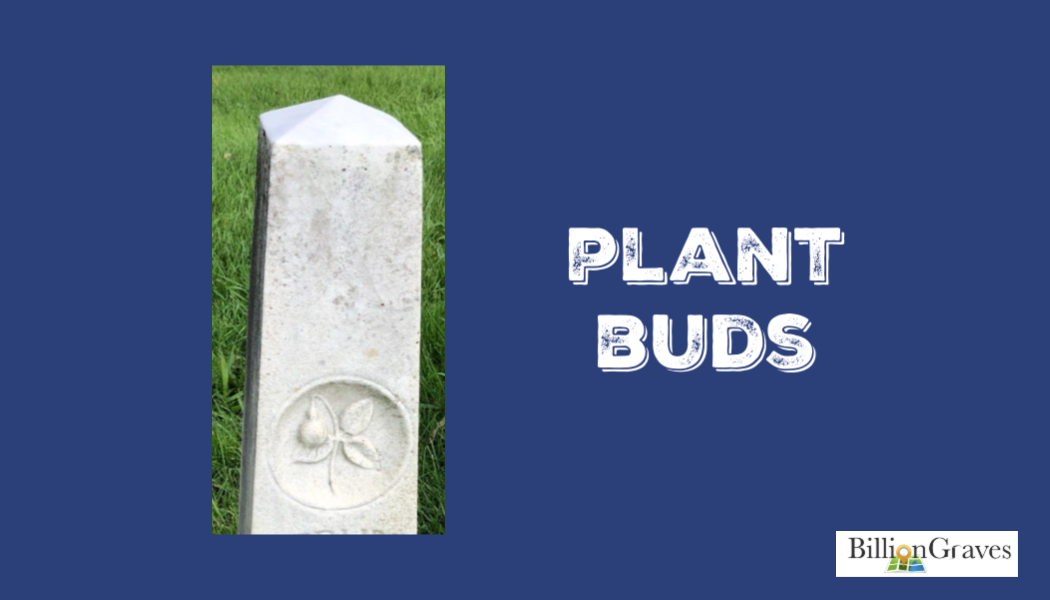 BillionGraves, cemetery, gravestone, plants, p, genealogy, ancestors, BillionGraves