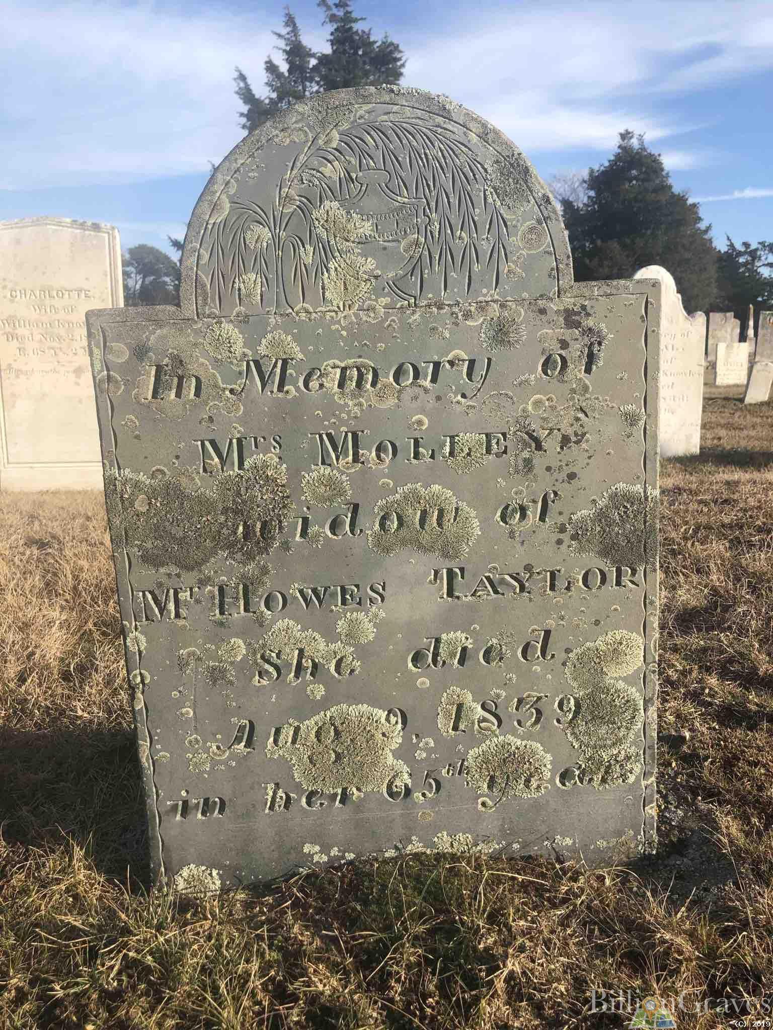 BillionGraves, gravestone, grave, damaged gravestones, cemetery, family history, ancestors, community service project, JustServe, BillionGraves app, ivy, plant growth, JustServe, lichen, mold