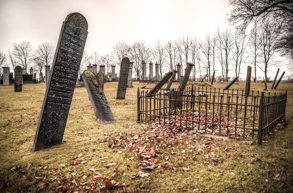 BillionGraves, gravestone, grave, damaged gravestones, cemetery, family history, ancestors, community service project, JustServe, BillionGraves app, ivy, plant growth, JustServe, Hebrew, Jewish graves
