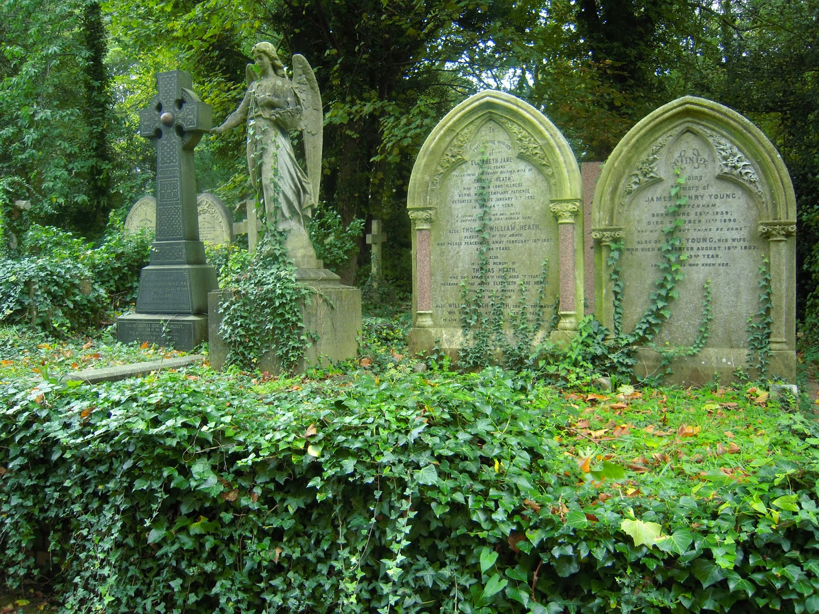 BillionGraves, gravestone, grave, damaged gravestones, cemetery, family history, ancestors, community service project, JustServe, BillionGraves app, ivy, plant growth, JustServe